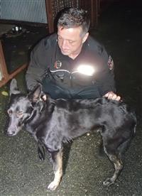 Odchycení psi  Prevence a osvěta  Město Tábor - oficiální webové stránky 0e67835541